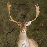 Logo del grupo Parque Natural de Los Alcornocales
